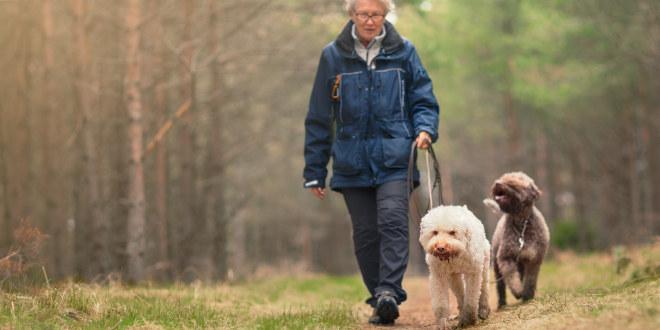 Eldre dame på tur i skogen med to hunder en høstdag.