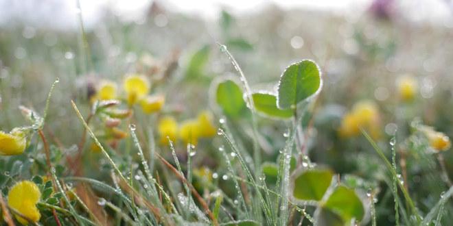 Fra en eng med ville blomster og gress fulle av duggdråper.