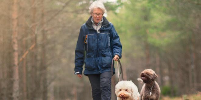 Eldre kvinne som går tur i skogen med to hunder.