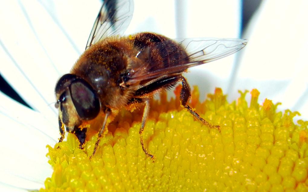 – Elevene lærer både å bygge og å se bienes funksjon i naturen ved pollinering av blomster, trær og busker, sier kontaktlærer Monica Klewe Løwe. Foto: Márcia Rodrigues