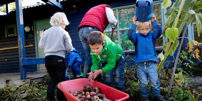 En gruppe barn og en barnehagelærer høster poteter. Barna jobber mens en tydeligvis har fødselsdag. Han tar på seg en stor blå kongekrone.