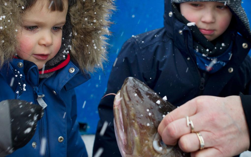 Under Lofotfisket har Sander Johansen (t.v.) og Oliver Gylseth et eget fiskeprosjekt i barnehagen og er på kaia i Reine i Lofoten hver uke for å se på fangsten. Foto: Ingun A.Mæhlum