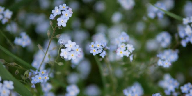 Blomster i en eng