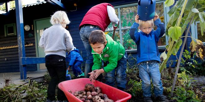 Bilde av barnehagebarn som høster poteter i kjøkkenhagen.