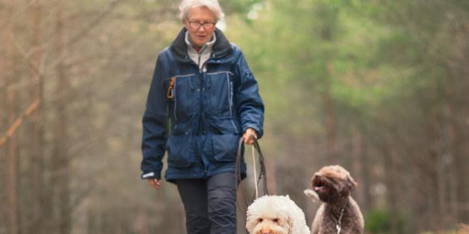 pensjonist, skog, senior, tur, natur, dyr, pensjon, ferie