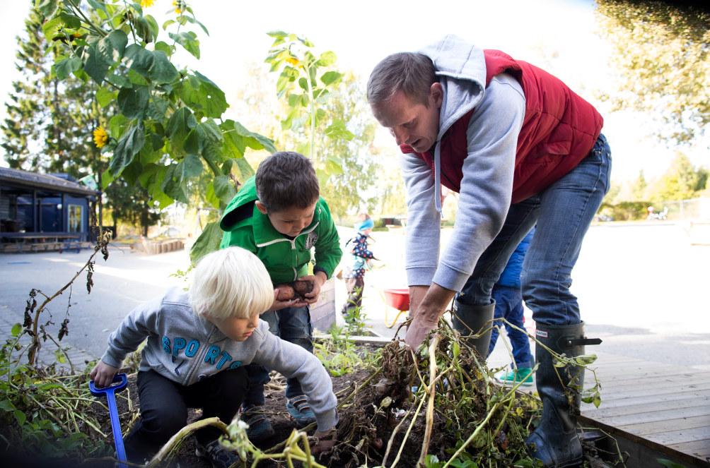 To barn graver opp poteter med en voksen mann. Barnehagebygning i bakgrunnen.