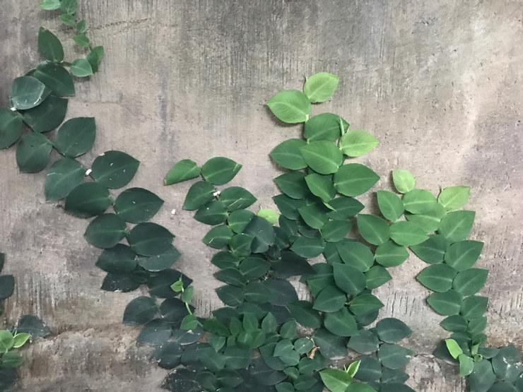 Grønt blad mot vegg