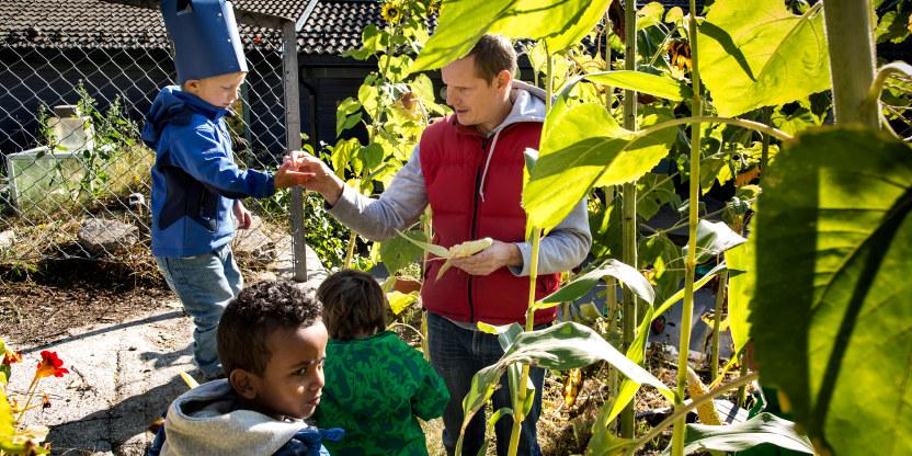 Bilde fra en barne hage ute i kjøkkenhagen. En voksen mannlig ansatt, samt tre barn smaker på avlingene